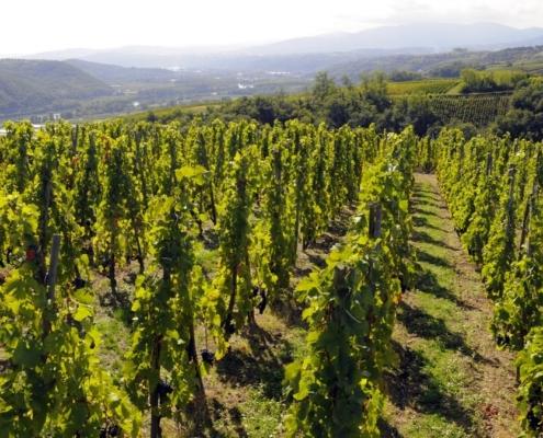 Domaine de Bonserine Leyat, le Rhône et le Mont Pilat en 2ème plan