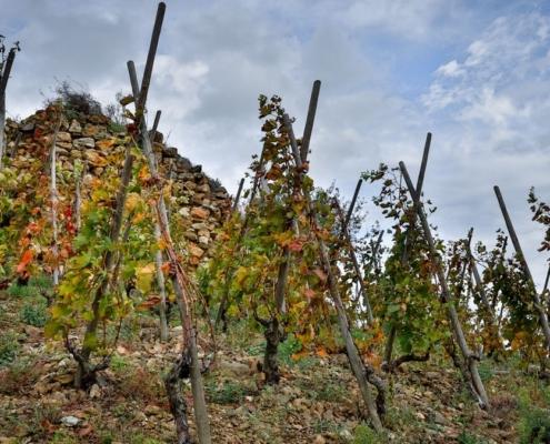Domaine de Bonserine la Côte Blonde en automne et les vestiges de la tour de Garde