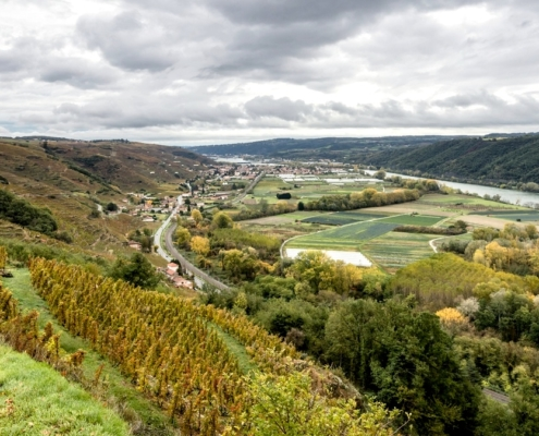 Domaine de Bonserine le vignoble et Ampuis vue de Tupin
